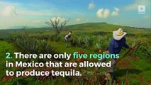 5 Tequila Facts for National Tequila Day