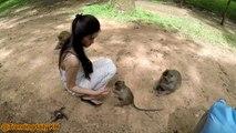 Méchanceté gratuite Drôles de singes à mourir de rire ep 2
