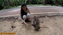 Méchanceté gratuite Drôles de singes à mourir de rire ep1