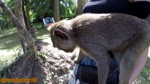 Singes drôles à Angkor wat EP 2