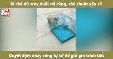 Bị chó dữ truy đuổi tới cùng, chú chuột xấu số quyết định nhảy sông tự tử để giữ gìn trinh tiết