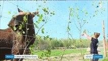 L'élan, un nouvel ambassadeur pour le parc animalier de Sainte-Croix