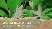 Anti-insomnie :  les vertus de la fleur d'oranger