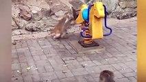 Diese Szene sorgt für Lacher im Netz. Im Pekinger Zoo klettert ein kleiner Affe auf ein Spielgerät. Doch die Mama ist offenbar dagegen -und schüttelt das Baby r