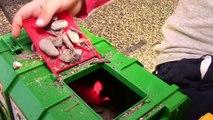 Bruder Toy Trucks at Pond: Garbage Truck, Bulldozer, Dump Truck, Loader Construction Vehic