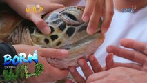 Born to Be Wild: Doc Nielsen saves a green sea turtle in critical condition