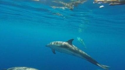 Ballenas, delfines y tortugas tienen ya un área protegida de 46.000 kms en el Mediterráneo