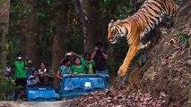 Wild Life in Uttrakhand Jungle Safari (बिनसर जंगल सफारी)  Tiger in Jungle safari   Tiger Vs Man