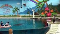 【※注】横浜・八景島シーパラダイス 海の動物たちのショー ~ウェリナ アロハ~ ver. new.9.21