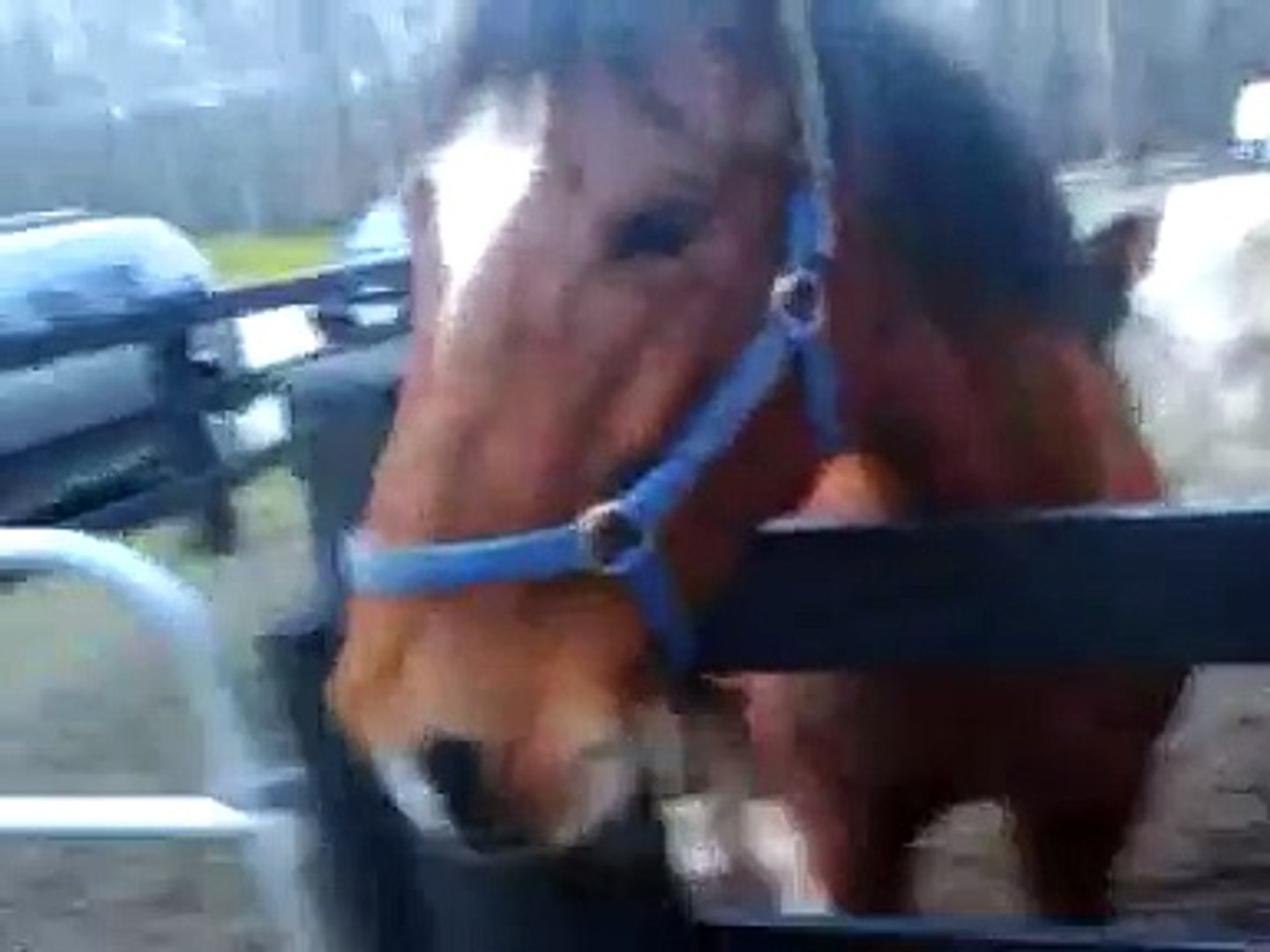 Horse Abuse