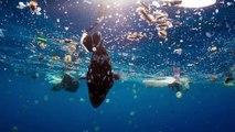 Família de baleias é destruída pelas águas poluídas | Planeta Azul II | Discovery Brasil