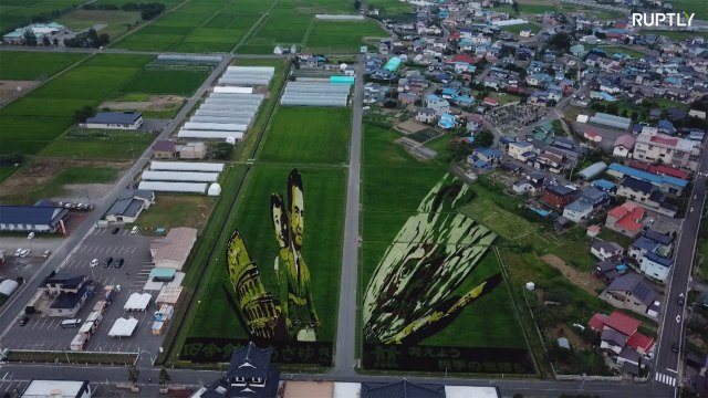 BasmARTY! Rice paddies become massive masterpieces in Japan