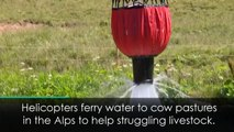 Swiss helicopters help thirsty livestock in the Alps
