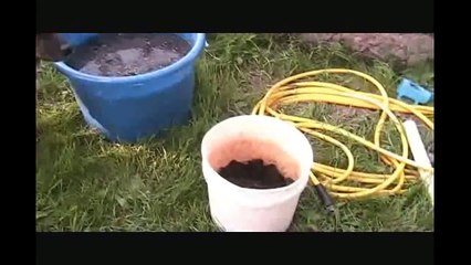 Pumpkins_How to grow pumpkins from seed Big Max