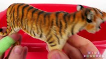 Lots of Wild Animals Learn Zoo Safari Sea Animal Names for Babies Kids Children Box of Toys