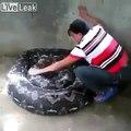 Elle nettoie... un serpent  anaconda géant !