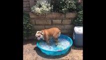 Este perro sabe cómo afrontar el bochorno del verano