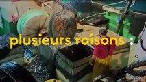 Pêche en eau trouble : le grand gaspillage des poissons pêchés