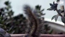 ∑ <불광출장샵> ★카톡:PS11★ ◆홈피:PIZ77.COM◆ 불광콜걸샵 불광콜걸 불광출장안마(추천)불광오피 ∑ 불광출장만남 ∑ 불광출장마사지 ∑ 불광출장업소 ∑ 불광콜걸후기 ∑ 불광출장샵추천 ∑ 불광콜걸샵 불광출장만남∑