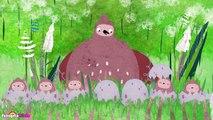 PIKKULI: Come out Pikkuli   Funny Birds Cartoons for Kids   HooplaKidz TV