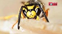 Es ist für viele verlockend, herumschwirrende Insekten einfach zu erschlagen. Doch das solltet ihr unbedingt lassen! Denn ihr könntet damit alles nur noch viel