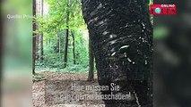 Dieser Hund beweist: Auch ein großes Tier schafft es, sich im Wald perfekt zu tarnen. Auf den ersten Blick ist der Hund kaum zu entdecken. Könnt ihr ihn sehen?