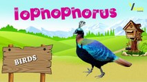 Birds Name And their sounds - Learn about birds - Different types of Birds - Kids Learning Center