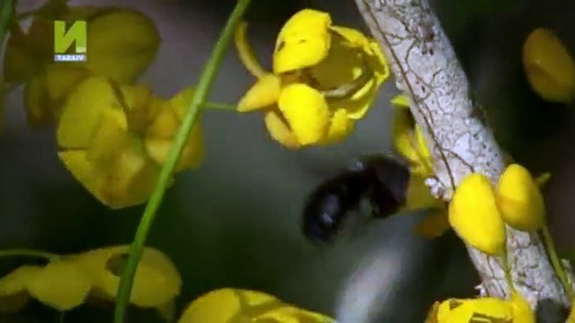 Nature  039 s Microworlds S01  E01 Galapagos