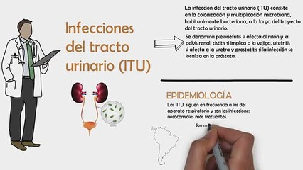 ¿TENGO INFECCIÓN URINARIA?   ¿QUE ES UNA ITU?   INFECCIÓN DEL TRACTO URINARIO (ITU)   FISIOPATOLOGIA