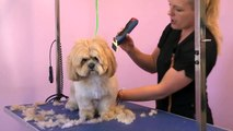 Grooming Guide Lhasa Apso Pet or Salon Trim Pro Groomer