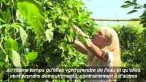 Une agriculture sans terre sur un toit de banlieue parisienne