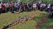 All About Crocodiles -  5 Biggest Crocodiles In The World!
