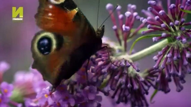 Nature  039 s Microworlds S01  E15 Making Worlds