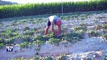 Canicule: 39 départements sont concernés par une restriction de consommation d'eau