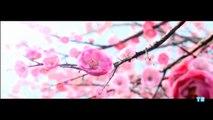 MULAN (2019) Teaser Trailer Concept - Liu Yifei 1