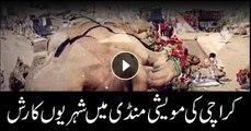 Citizens throng cattle markets in Karachi