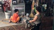 Un enfant protège une oie que sa mère veut tuer pour le repas