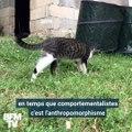 Journée mondiale du chat: cette comportementaliste vous décrypte tous ces petits gestes incompréhensibles de votre félin
