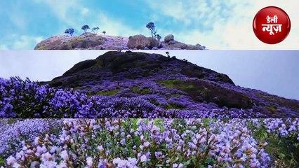 12 साल बाद खिला ये अद्भुत नीला फूल, देश-दुनिया से देखने वालों की लगीं कतारें...
