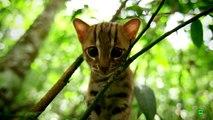 Felinos (cap 1)---- documentales animales,documental animales,animales salvajes,animales,naturaleza,documentales naturaleza,documental naturaleza,documentales de animales,documentales de leones,animales salvajes de africa