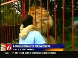 AMAZING - Lion hugs and kisses woman