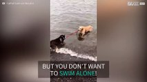 Dog desperate for a swimming buddy drags her friend into the ocean