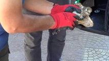 Kerkenez Kuşu Koruma Altına Alındı
