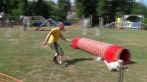 Concours d'agility Mon chien mon ami (Quaregnon) (5)