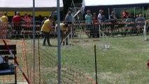 Concours d'agility Mon chien mon ami (Quaregnon) (2)