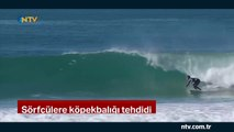 Sörfçülere köpek balığı tehdidi... (Köpek balığı kıyıya yaklaşınca organizasyon ertelendi)