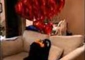 Small Dog Delivers Heart-Shaped Balloons