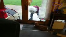 Funny cats scared of random things - Funny cats compilation | Top Funny Cat Fails Compilation - Funny Cats | Funny cats videos - funny cats vine compilation