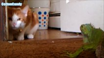 Top Funny Cat Fails Compilation - Funny Cats   Funny cats videos - funny cats vine compilation