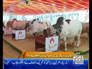 کراچی میں ایشیا کی سب سے بڑی مویشی منڈی میں خوبصورتی کی بہار آ گئی